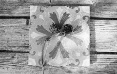 Fruit Tiles: Decayed Sunflower. Camera: Nikon F100. Film: Kodak Tri-X 400 @ 400, Rodinal.